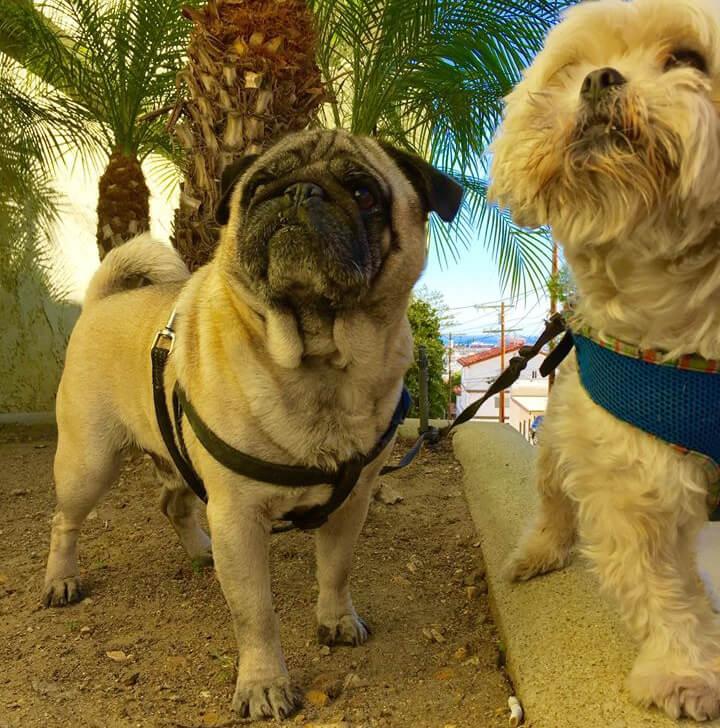 Мои собаки тоже билингвы — они отлично понимают и по-русски, и по-английски