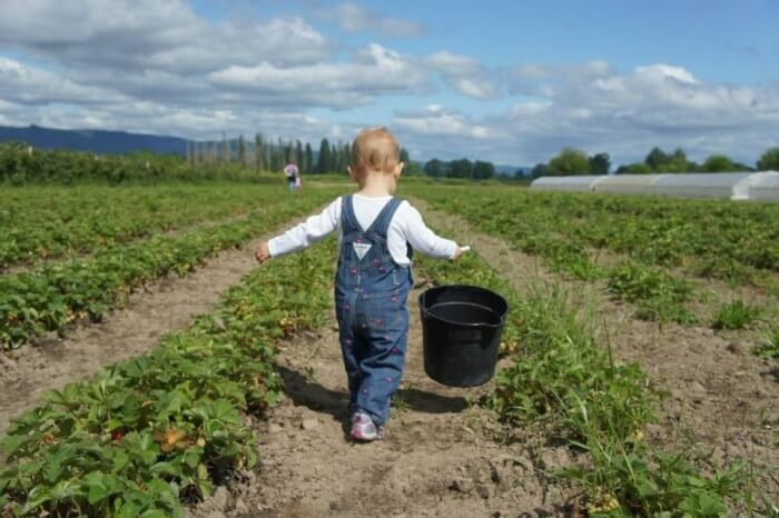 baby-in-strawberry-field-700x466