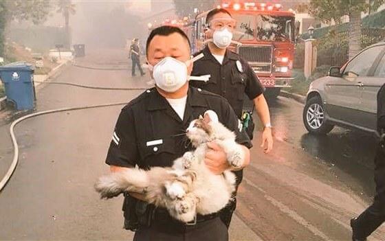 Калифорния впламени: вштате сражаются слесными пожарами