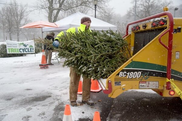 How to recycle the Christmas tree after the holidays in New York: three ways
