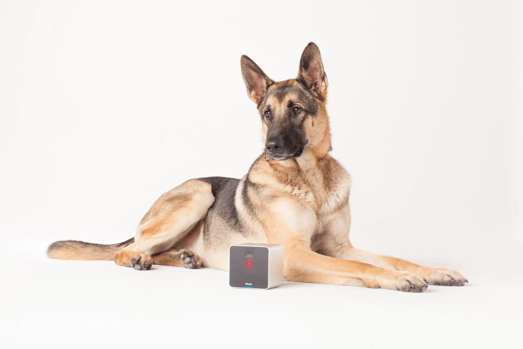 Petcube_Camera-Dog
