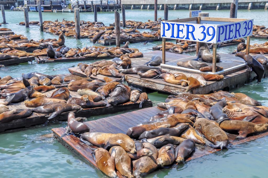 Главные на 39 пирсе - морские львы. Фото: Depositphotos