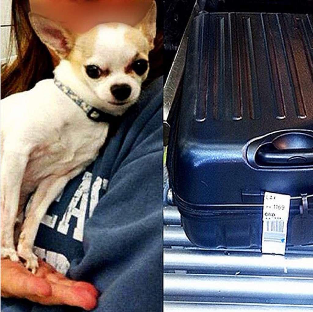 Собаку нашли в багаже во время сканированичя чемодана перед погрузкой в самолет. Фото: instagram.com/tsa/
