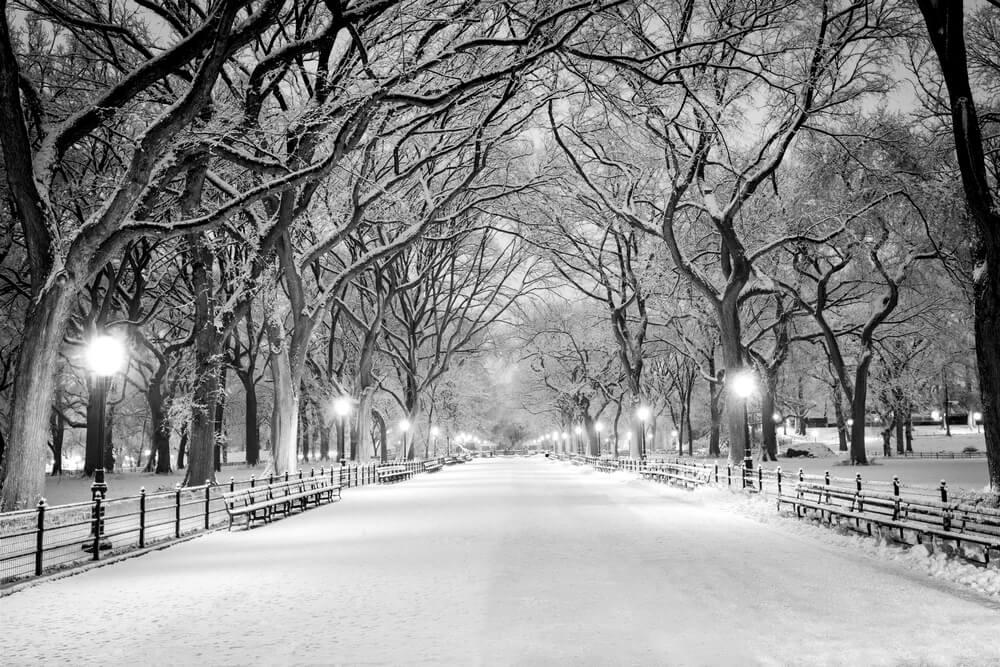 Central Park Christmas Lights