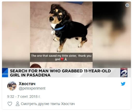 Little dog saved a girl from abduction - ForumDaily
