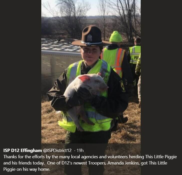 Because of the accident in Illinois, thousands of piglets appeared